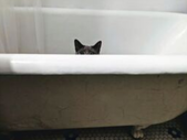 Cat poking only their eyes and ears out of a bathtub